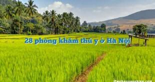 28 phòng khám thú y ở Hà Nội