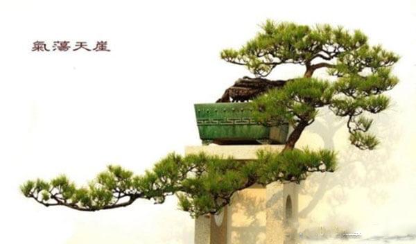 4 dang cay co ban trong nghe thuat cay canh 3 - 4 dáng cây cơ bản trong nghệ thuật cây cảnh