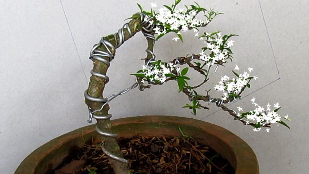 4 dang cay co ban trong nghe thuat cay canh 4 - 4 dáng cây cơ bản trong nghệ thuật cây cảnh