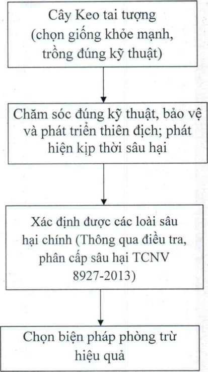 bien phap phong tru sau do gay hai cay keo tai tuong - Biện pháp phòng trừ sâu đo gây hại cây keo tai tượng