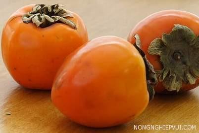 cach khac phuc hong rung qua - Cách khắc phục hồng rụng quả