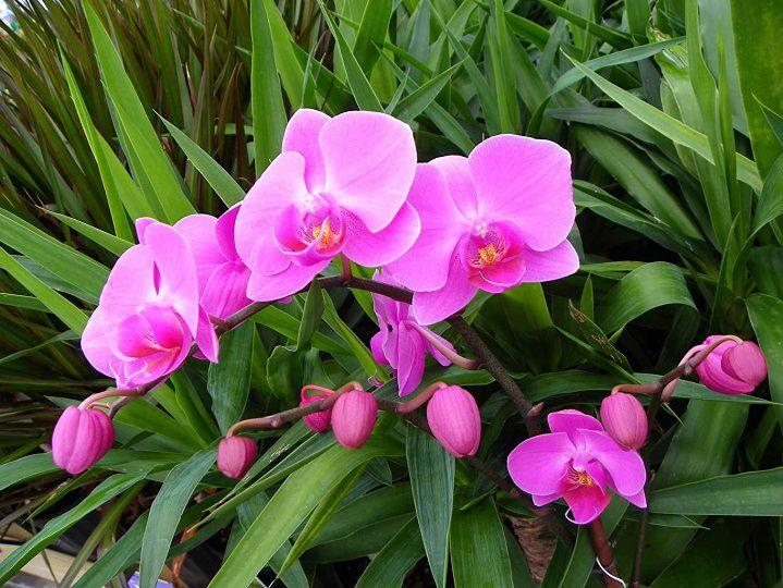 Cách kích thích cây ra hoa: tăng nhiệt độ, phân bón kích thích ra hoa,...