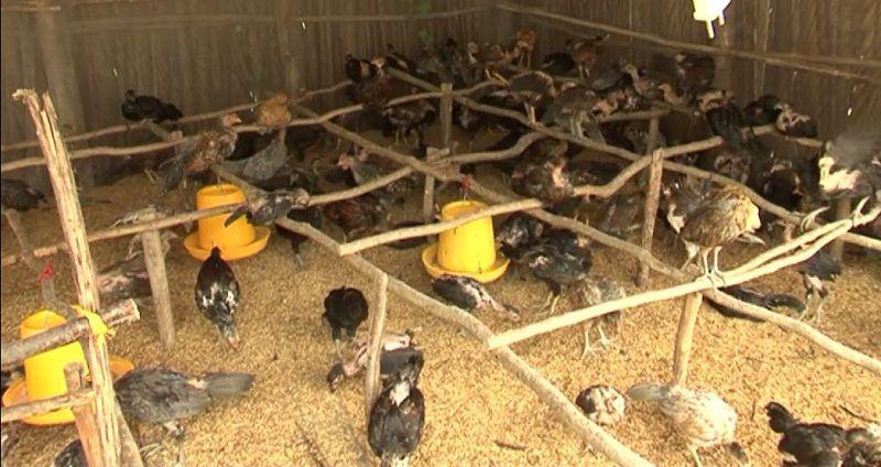 cach lam chuong nuoi ga tha vuon chi phi xay chuong cho ga tha vuon 2 - Cách làm chuồng nuôi gà thả vườn. Chi phí xây chuồng cho gà thả vườn