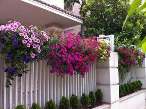 cham soc nhung cay hoa da yen thao 2 - Chăm sóc những cây hoa dạ yến thảo