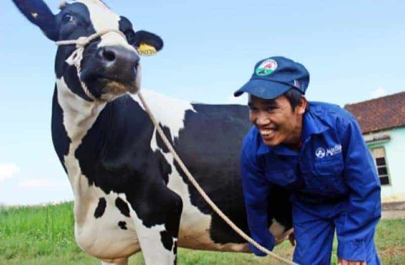 chi phi dau tu trang trai bo sua la bao nhieu 2 - Chi phí đầu tư trang trại bò sữa là bao nhiêu?