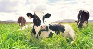 chi phí đầu tư trang trại bò sữa