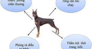 cắt đuôi cho chó