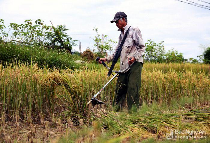 Giá máy cắt lúa mini cầm tay. Giá máy cắt lúa (gặt đập liên hợp) Kubota