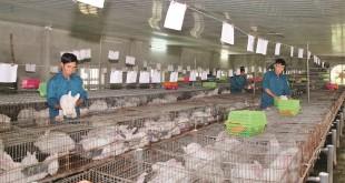 Giá thỏ giống và thỏ thịt hiện nay. Trang trại bán thỏ giống trên cả nước
