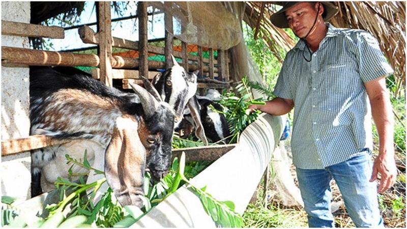 Hướng dẫn cách làm chuồng nuôi dê thịt và dê sinh sản