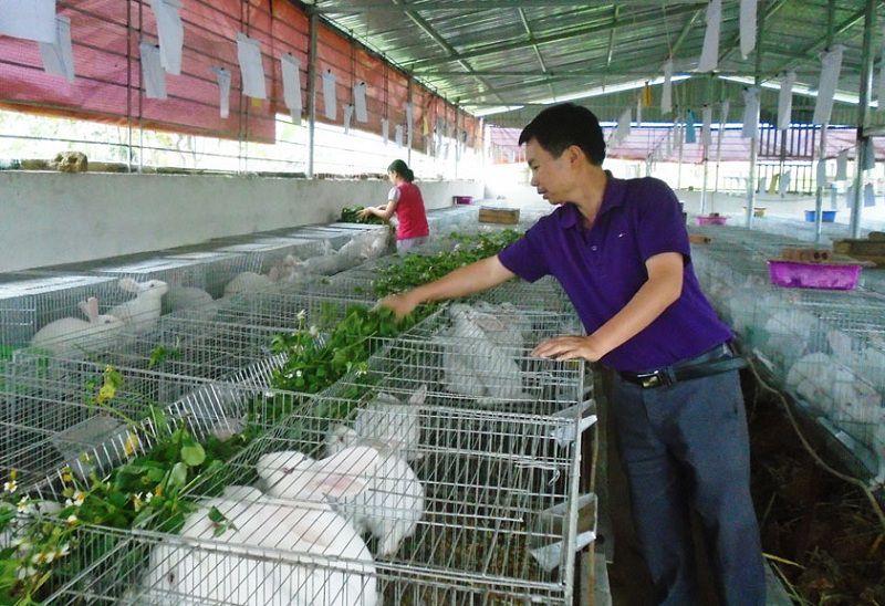 Hướng dẫn cách làm chuồng nuôi thỏ thịt và thỏ sinh sản