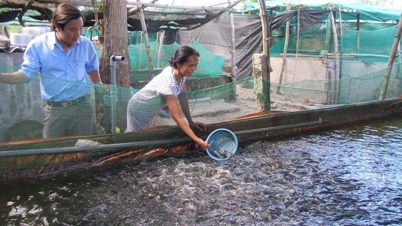 huong dan ky thuat nuoi ca trong be xi mang theo cong nghe moi 1 - Hướng dẫn kỹ thuật nuôi cá trong bể xi măng theo công nghệ mới