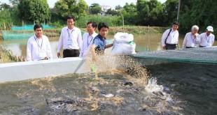 Nuôi cá trong bể xi măng.Kỹ thuật nuôi cá trong bể xi măng công nghệ mới