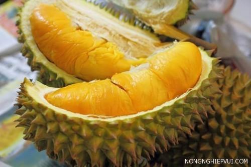 kinh nghiem trong sau rieng monthoong - Kinh nghiệm trồng sầu riêng Monthoong