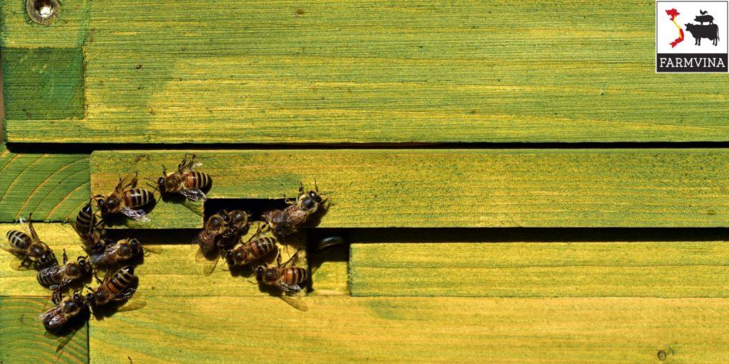 ky thuat kiem tra dan ong khi nuoi dan 1 - Kỹ thuật kiểm tra đàn ong khi nuôi đàn
