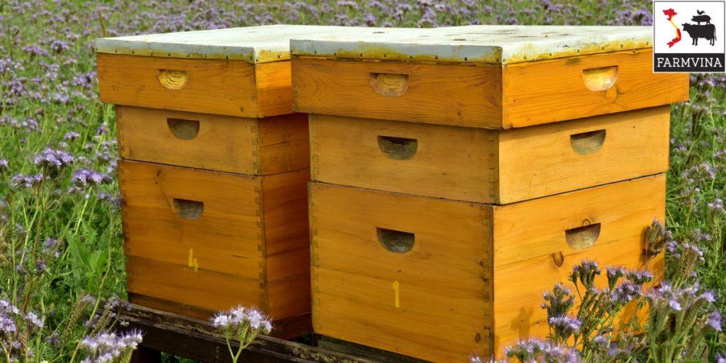 ky thuat kiem tra dan ong khi nuoi dan - Kỹ thuật kiểm tra đàn ong khi nuôi đàn