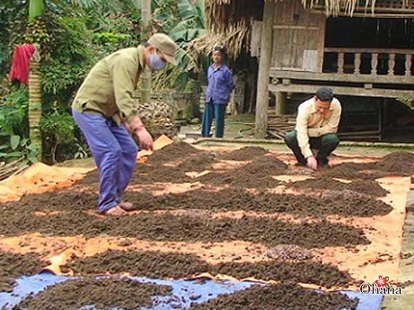 ky thuat nuoi trun que nang suat cao – nhanh duoc thu hoach 2 - Kỹ thuật nuôi trùn quế năng suất cao – nhanh được thu hoạch