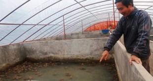 lao nong thu tien ty moi nam tu nuoi ech bang thao duoc 310x165 - Lão nông thu tiền tỷ mỗi năm từ nuôi ếch bằng thảo dược