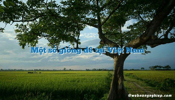 Một số giống dê tại Việt Nam