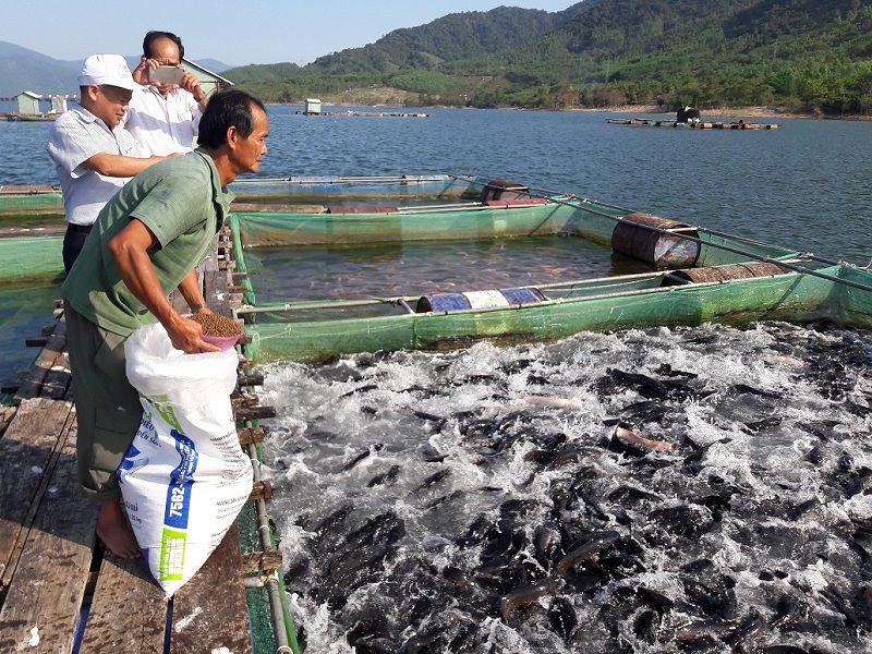 Mô hình nuôi cá lóc. Kỹ thuật nuôi cá lóc trong bể xi măng