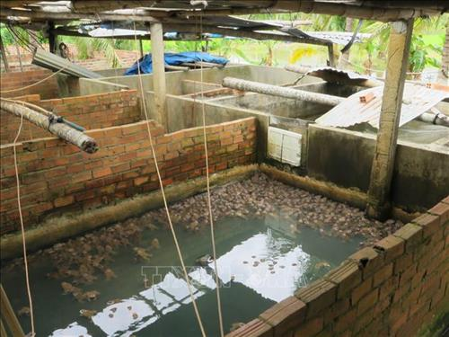 mo hinh nuoi ket hop ech va ca lam giau cua anh cao van phuong 2 - Mô hình nuôi kết hợp ếch và cá làm giàu của anh Cao Văn Phương