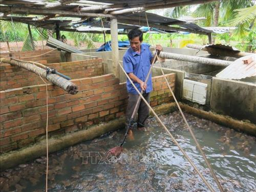 mo hinh nuoi ket hop ech va ca lam giau cua anh cao van phuong 3 - Mô hình nuôi kết hợp ếch và cá làm giàu của anh Cao Văn Phương