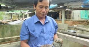 mo hinh nuoi ket hop ech va ca lam giau cua anh cao van phuong 310x165 - Mô hình nuôi kết hợp ếch và cá làm giàu của anh Cao Văn Phương