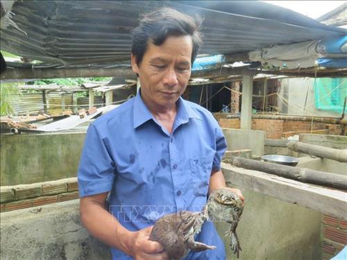 mo hinh nuoi ket hop ech va ca lam giau cua anh cao van phuong - Mô hình nuôi kết hợp ếch và cá làm giàu của anh Cao Văn Phương