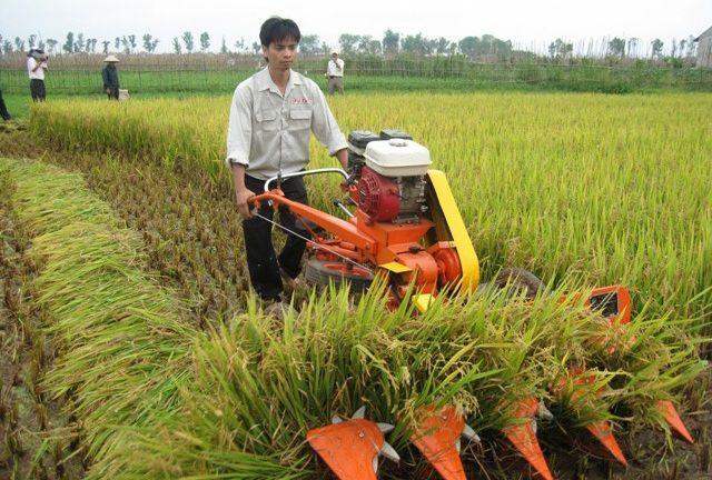 Mua bán máy gặt lúa giá bao nhiêu? Giá máy gặt lúa xếp dãy và cầm tay