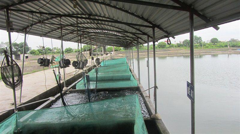 mua ca giong o dau nhung trai ca giong lon nhat va uy tin nhat tai ha noi 1 - Mua cá giống ở đâu? Những trại cá giống lớn nhất và uy tín nhất tại Hà Nội