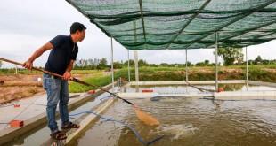Mua cá giống ở đâu? Các trại cá giống lớn nhất và uy tín nhất tại Hà Nội