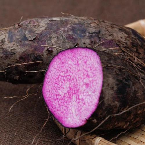 phòng trừ sâu bệnh cho cây khoai mỡ