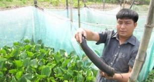 rắn ri voi