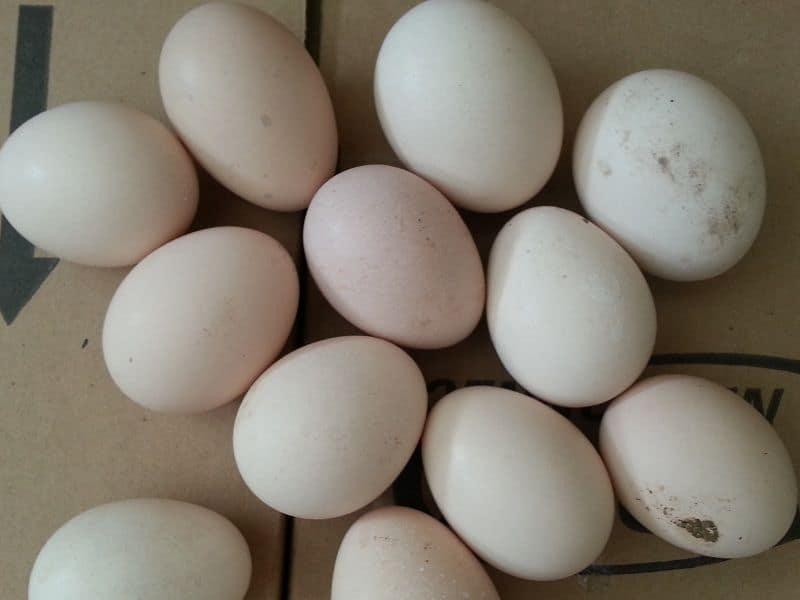 trứng gà Đông Tảo