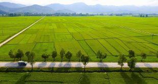 387 canh dong muong thanh 310x165 - Phú Yên: Hiệu quả từ mô hình nuôi cua xanh thương phẩm kết hợp với tôm