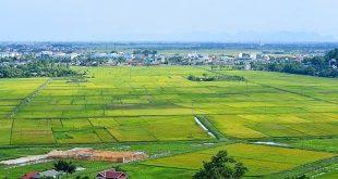9 Nhung canh dong lua ha noi mytour 2 310x165 - Kỹ thuật chuyển hóa rừng trồng gỗ nhỏ sang rừng trồng gỗ lớn đối với loài cây keo lai